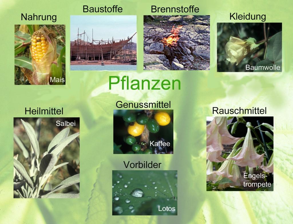 Abb1-Pflanzennutzung