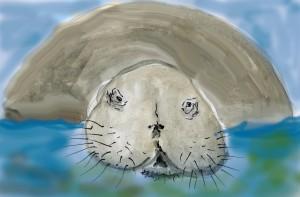 Porträt der Stellerschen Seekuh (Aquarell W. Probst)