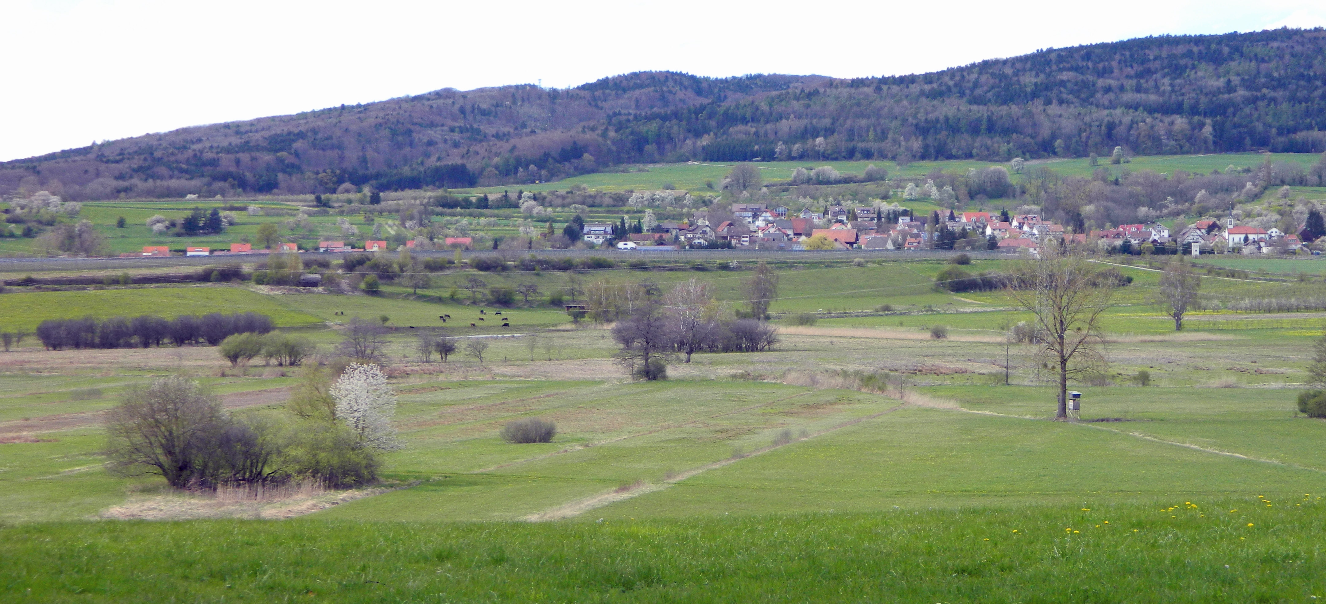 Blick aufs Hepbach-Leimbacher Ried am 27.4.2012 (Foto Probst)