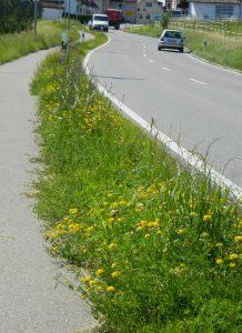 Zwischen Radweg und Straße, Waltenweiler, 27.6.2016 (Foto Probst)