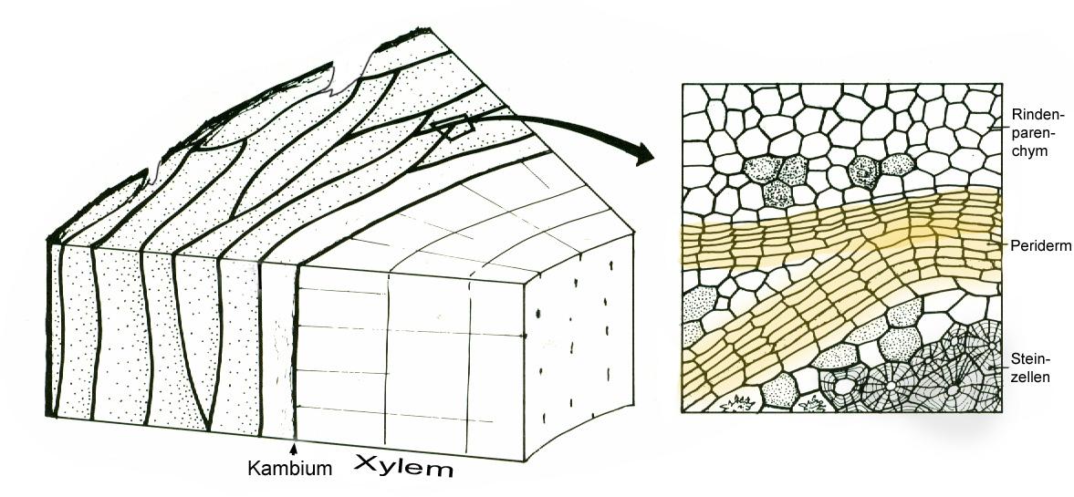 baumvolumen berechnen prisma prisma gew chshaus volumen. Black Bedroom Furniture Sets. Home Design Ideas