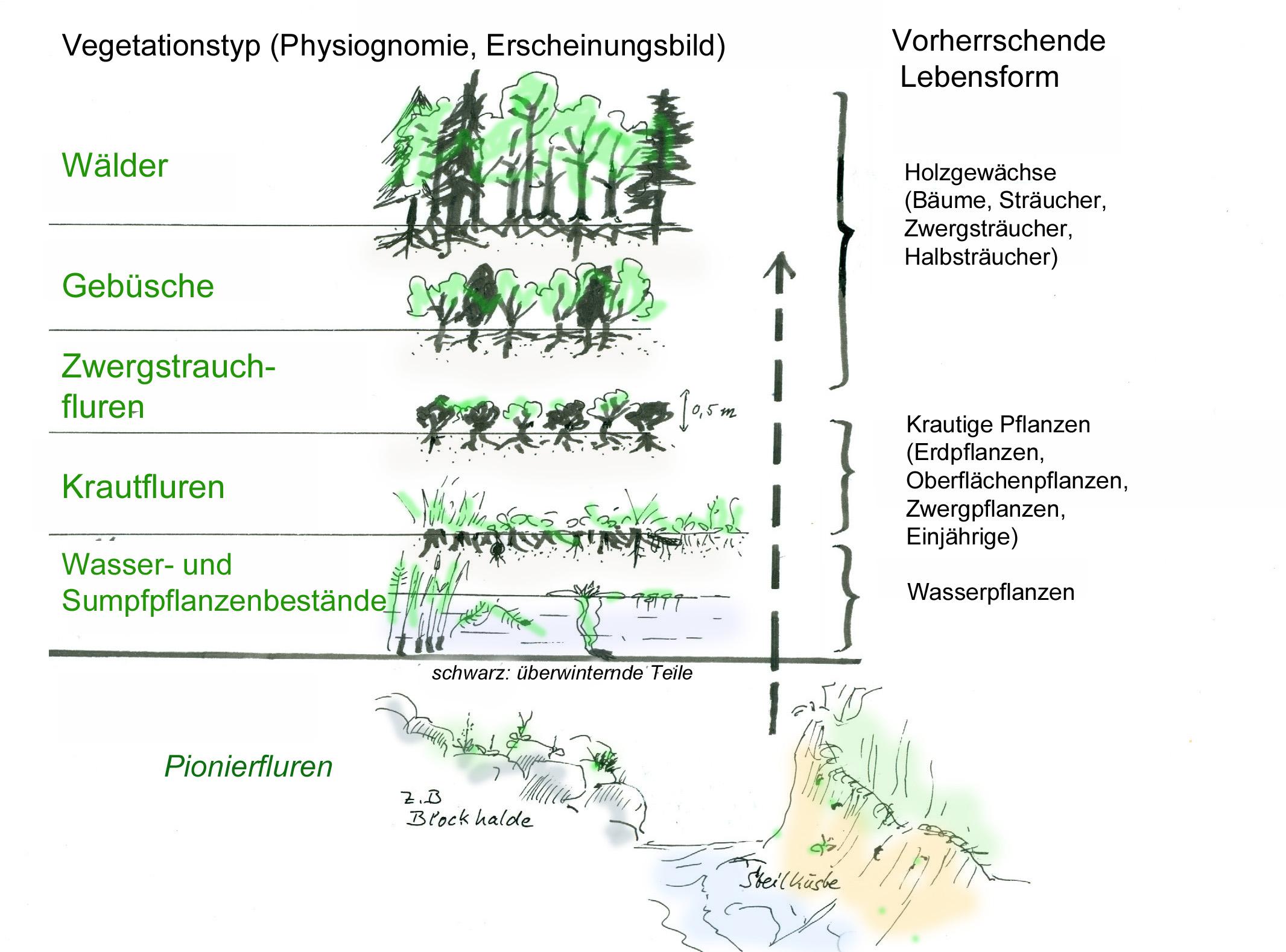 Zusammenhang zwischen Vegetationstyp und Lebensformen