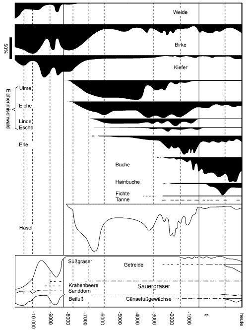 Pollendiagramm vom Ende der letzten Kaltzeit bis zur Gegenwart (nach Frey/Lösch, Geobotanik,3.A. 2010, S.159)