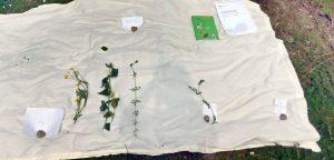 Pflanzen an der Rotach