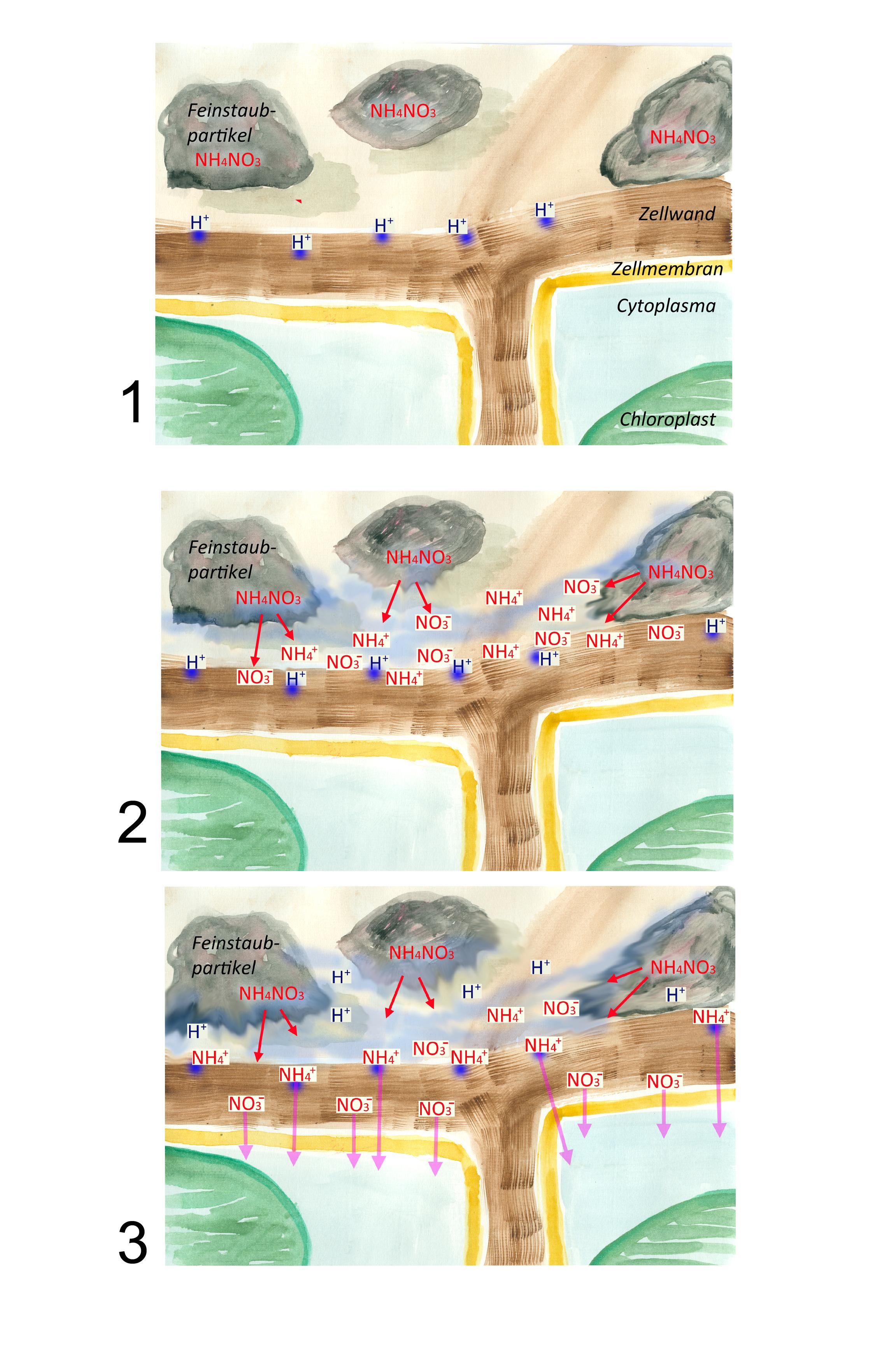 welche moosarten binden feinstaubpartikel